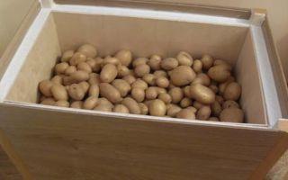 Как хранить картошку зимой на балконе
