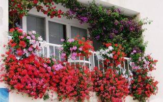 Особенности выращивания цветов на балконе