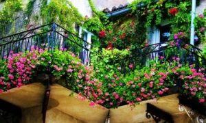 До какой температуры можно держать на балконе комнатные цветы
