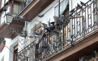 Как лучше избавиться от голубей на балконе