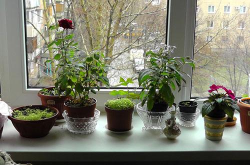 Цветы помогают окнам запотеть