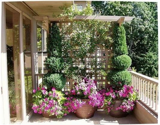 Что можно посадить на балконе большого размера