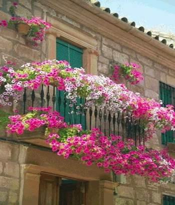 Горизонтальное оформление балкона цветами
