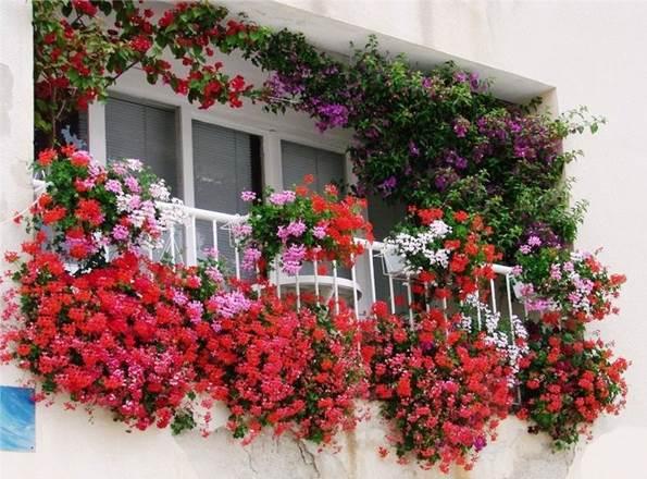 Какие цветы посадить на балконе