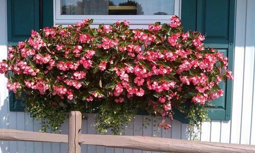 Цветы на балконе: какие цветы посадить чтобы цвели все лето.