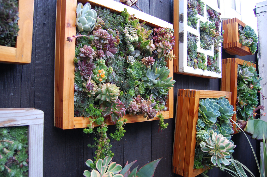 Оазис из цветов на балконе