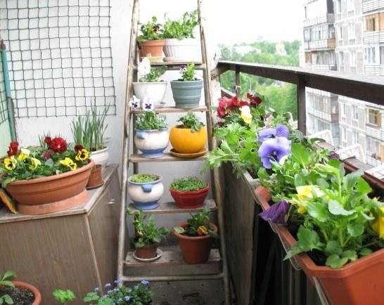 Размещение растений на балконе в зависимости от освещения
