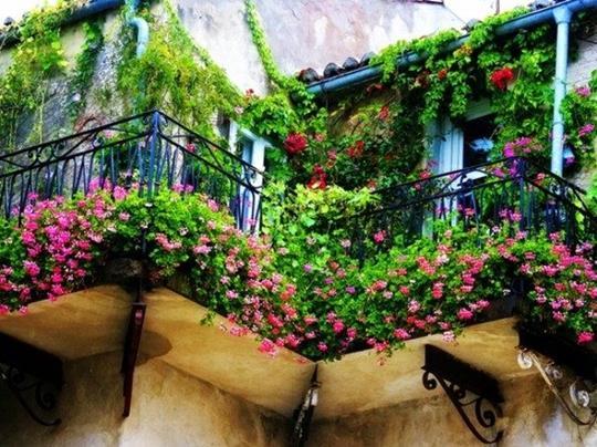Цветы на балконе до поздней осени
