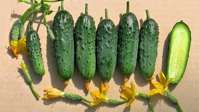 Урожай сорта огурцов для балкона