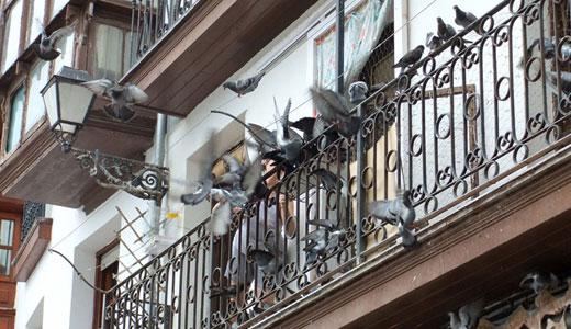 Голуби на балконе – источник шума и помета