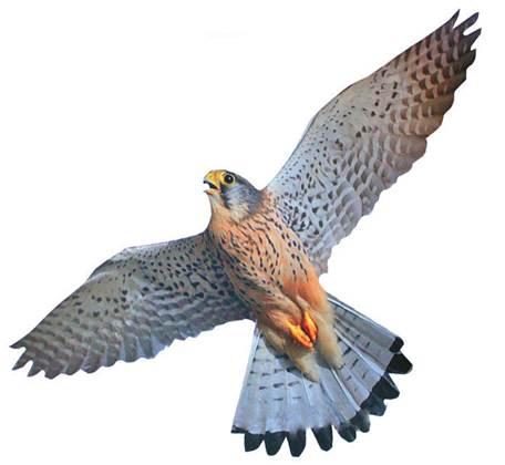 зделие в виде хищной птицы, отпугивавшей голубей