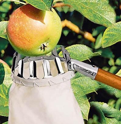 Плодосборник для сбора фруктов