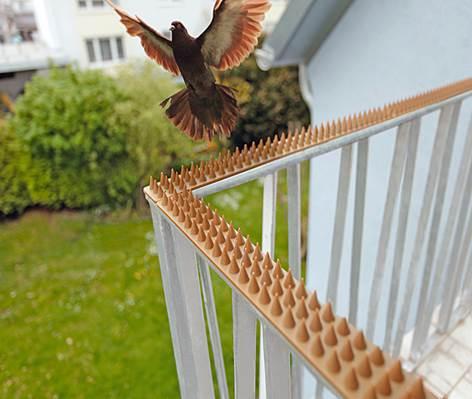 Устройство для отваживания голубей от перил
