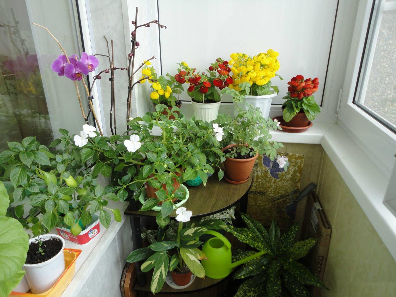 Оформление маленькой кухни с зимним садом на балконе